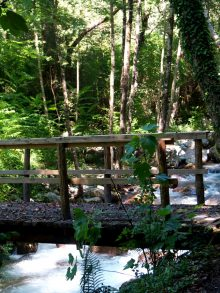 "Nature Reserve: ""The Valley of the River Argentino"" – Orsomarso (CS)"